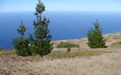 The Pines Of Portola